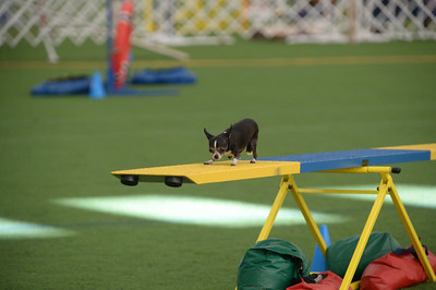 Dauphin Dog Training Club AKC Agility Trial October 17-18