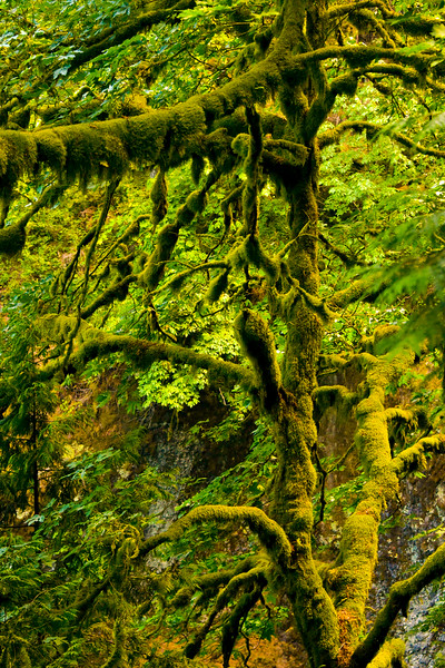 Covered With Moss