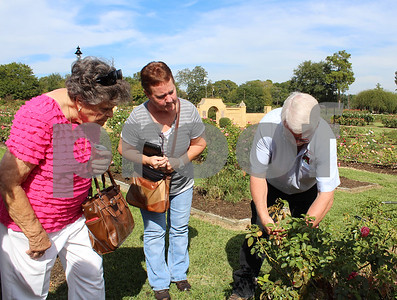 all-about-roses-walk-teaches-plant-care-through-rose-garden-tour