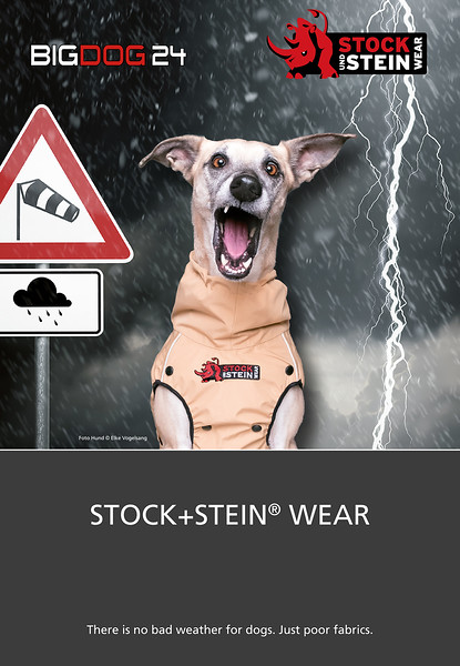 Commercial dog photography 1.jpg