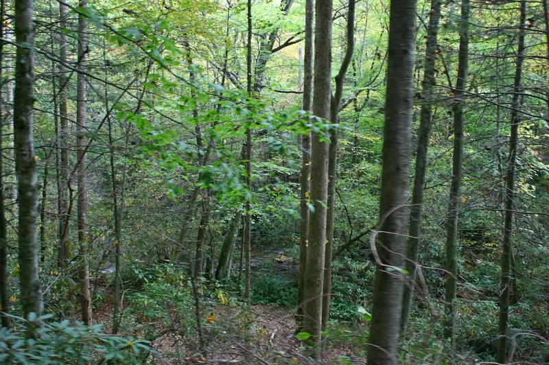 Pisgah Forest 9-30-12 31.jpg