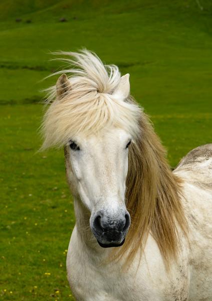 ICELAND-HORSES-290.jpg