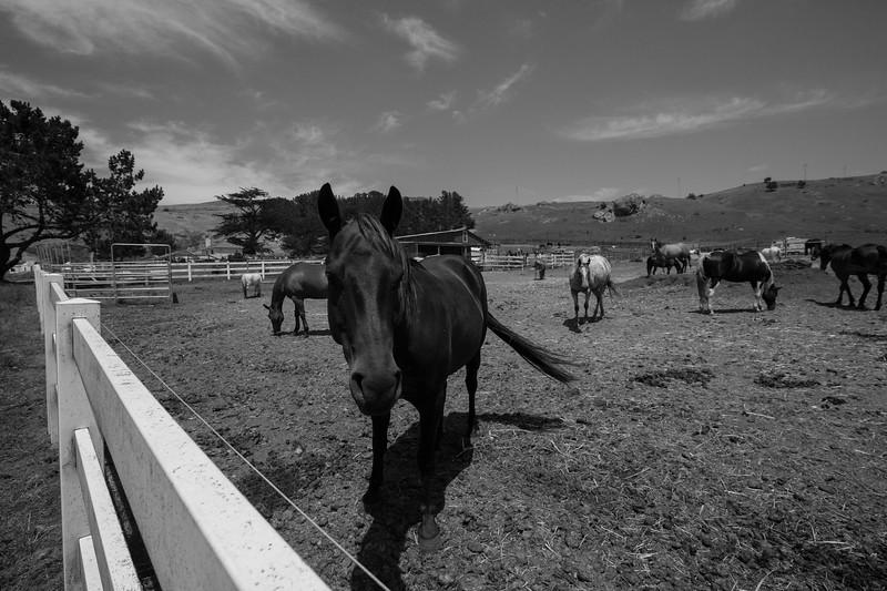 Chancellor Ranch, Bodega Bay California