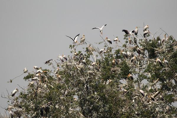 East Africa, Serengeti and Zanzibar - Lake Manyara Tree Lodge - Day 1