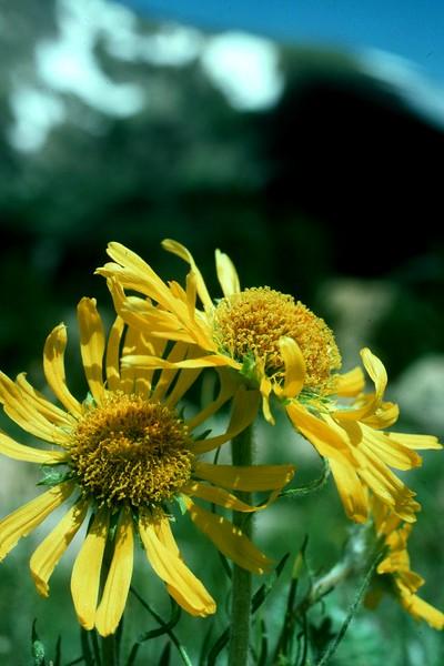 amh FLOWERS (1084).jpg