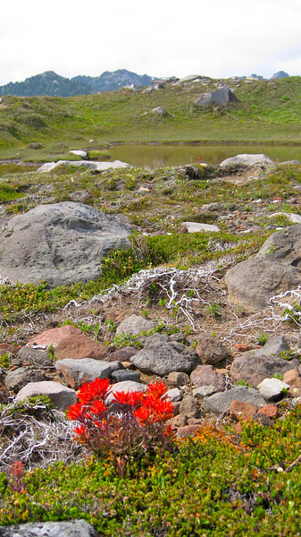 Paintbrush and another  little tarn.