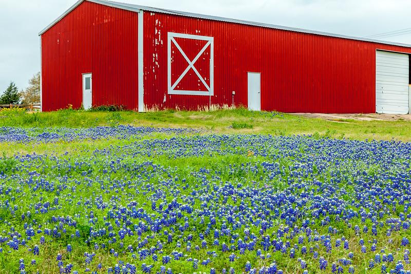 2015_4_3 Texas Wildflowers-7525.jpg