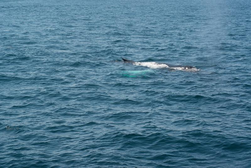 humpbacks-4184.jpg