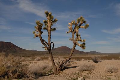 Mojave Desert, March 2009