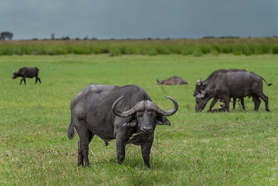 Chobe River_3646-Edit