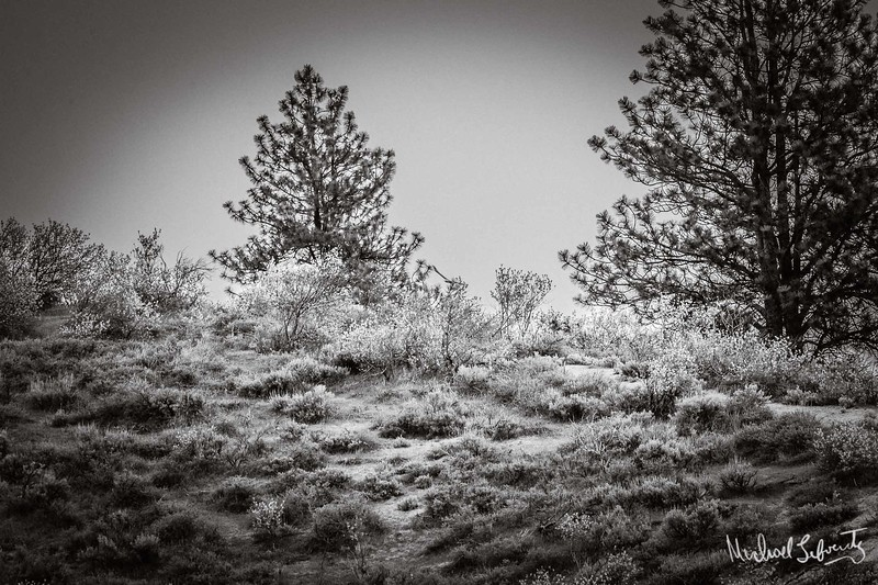 high desert with trees. (1 of 1).jpg