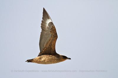 Birding the Magellan Straits