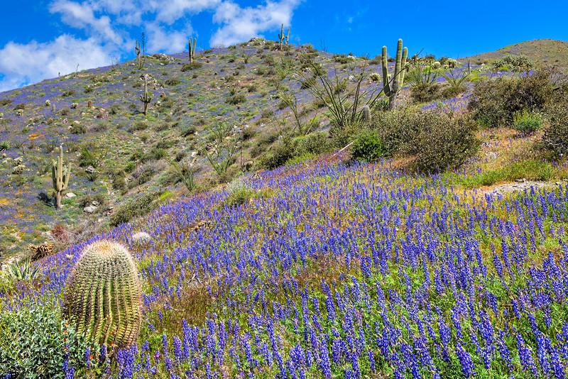 4909 Blooming Desert
