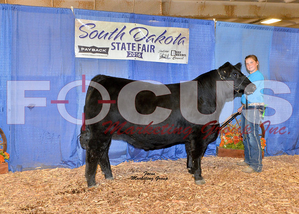 Angus Shows