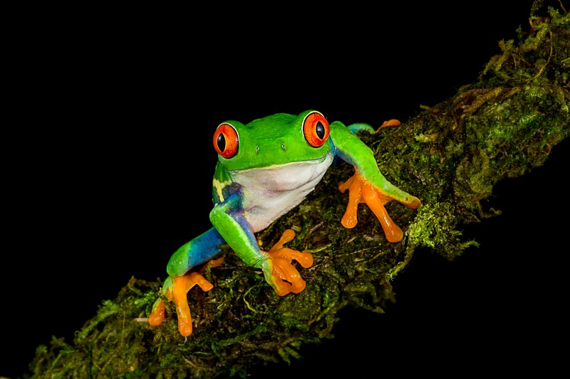 Frogscapes064_Cuchara_0008_121116_193521_5DM3L.jpg