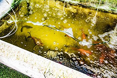 Spoor Fish Pond 6/20
