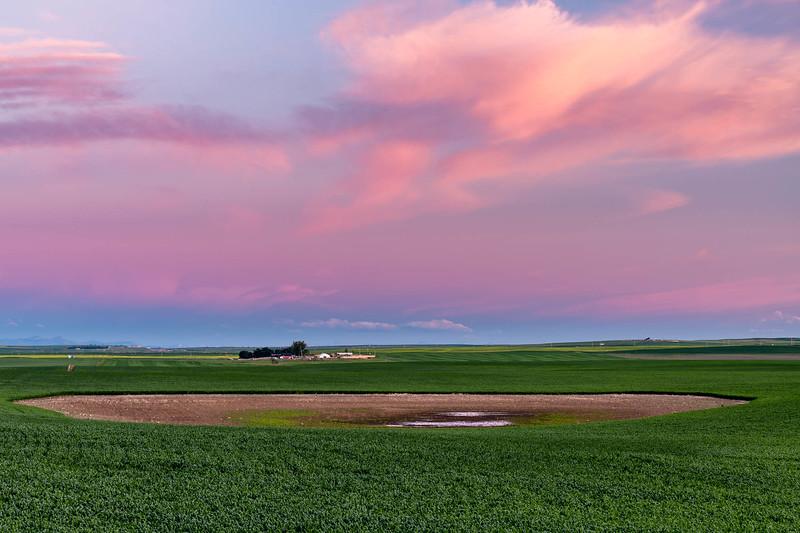 barley 37.jpg