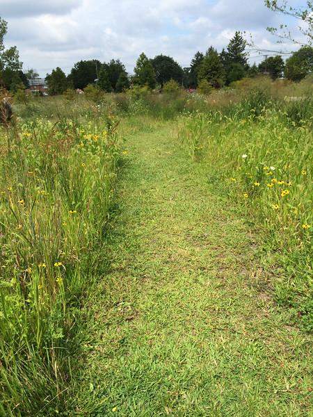 Meadow Ideas & BCEC Photos