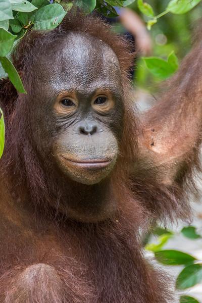 Borneo-2235.jpg