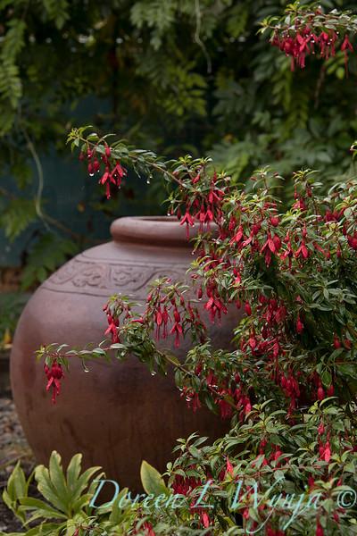 Fuchsia 'David' - jardiner_4438.jpg