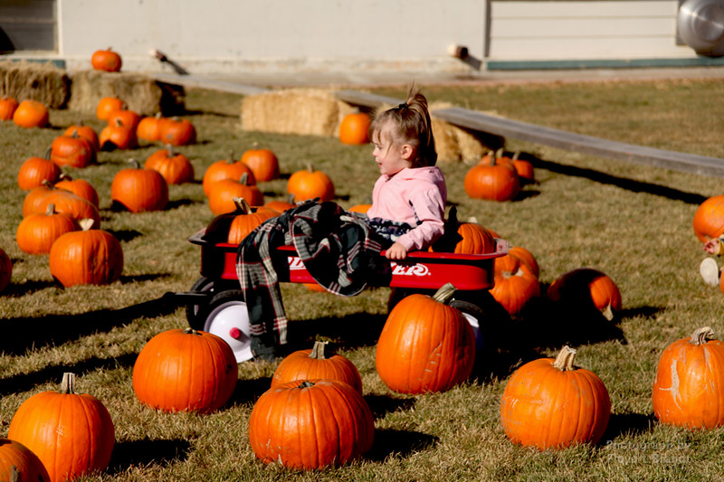 Havre Daily News/Floyd Brandt  Taking a wagon ride for two year old Aurora Scovel through the pumpkin patch at Saint Jude's School  Pumpkin Patch  Saturday Oct 21, 2017 Havre, Montana