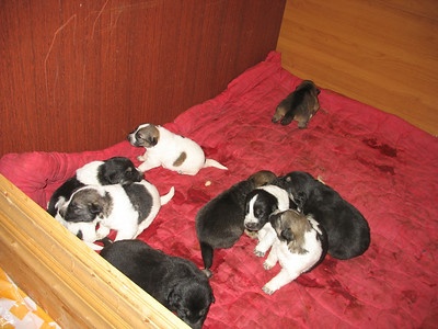 2009-04-05, Laima and the puppies
