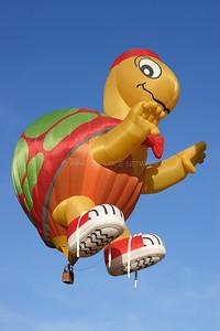 Cameron Turtle 120