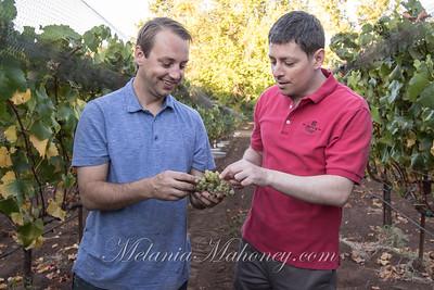 Jarvis Chardonnay Harvest 2016