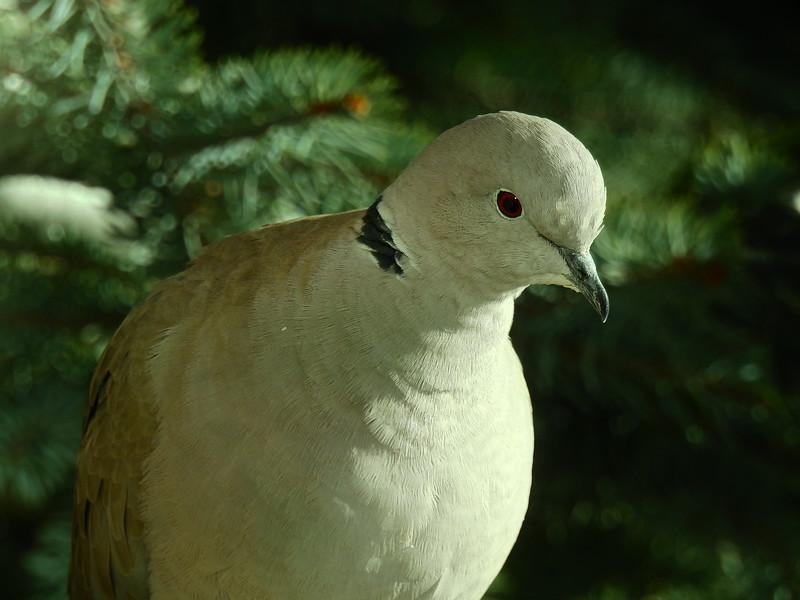 birds (197).JPG