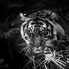 Fine Art Wildlife :
