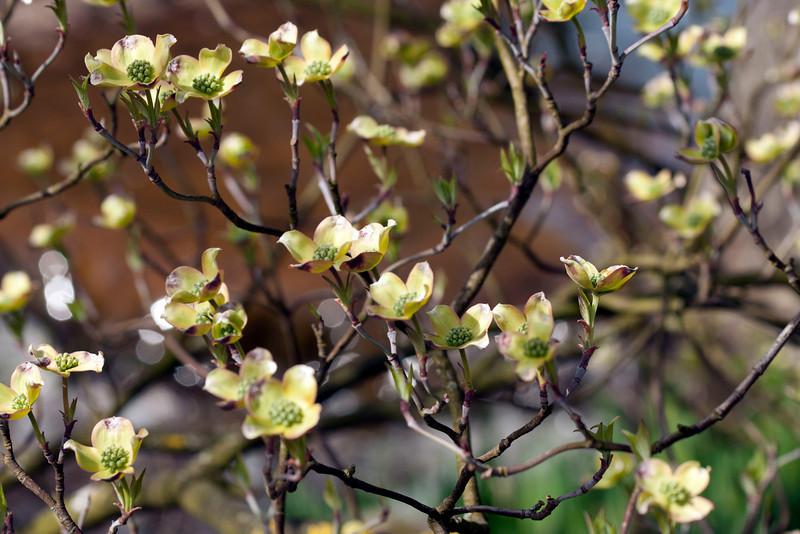 Tien geurende bloempjes.jpg