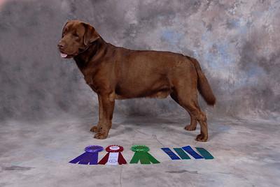 UKC Dog Show -  Aug 2007