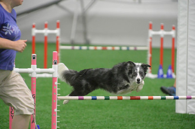 Y2K9s UKI Agility Trial August 13