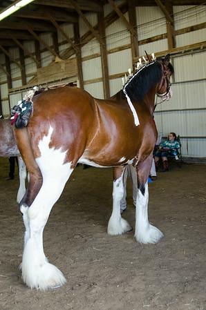 Grand Champion.Reserve Stallion