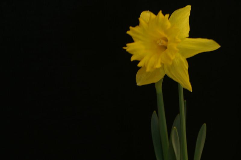 Yel Flower16.jpg