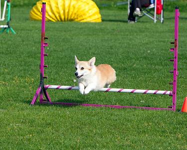 Dog Agility Trials - 2010