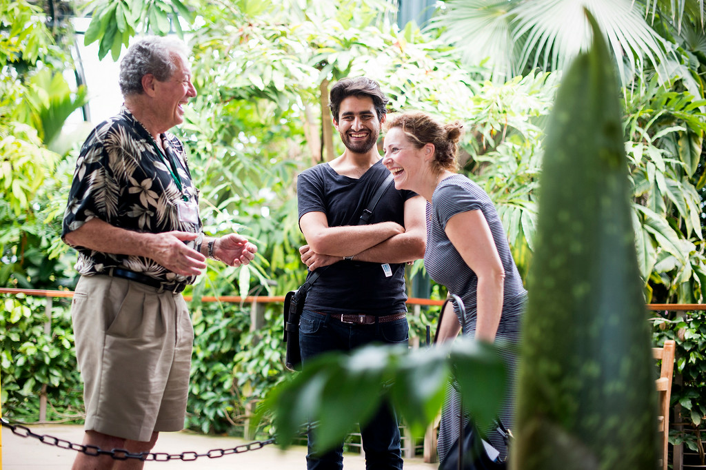 . Garden docent Bob Maronde, left, explains to a couple how stinky The Huntington�s Corpse Flower, in the foreground, is Thursday, August 14, 2014 at The Huntington in San Marino. The flower, which smells like rotting flesh, is expected to bloom within a week. In 1999 some 76,000 people showed up for the 1999 bloom of the �Stinky Flower.� That event was the first-ever in California and created an international sensation.(Photo by Sarah Reingewirtz/Pasadena Star-News)