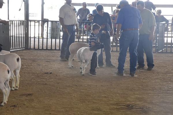 FAIR Livestock Show Judging