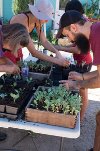 2017 Fall Seeds to Starts Workshops