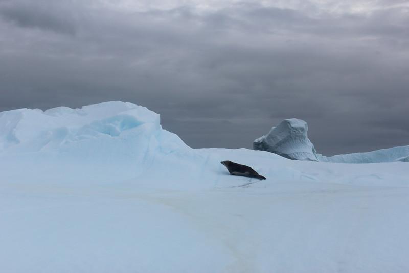 Antarctica 264.JPG