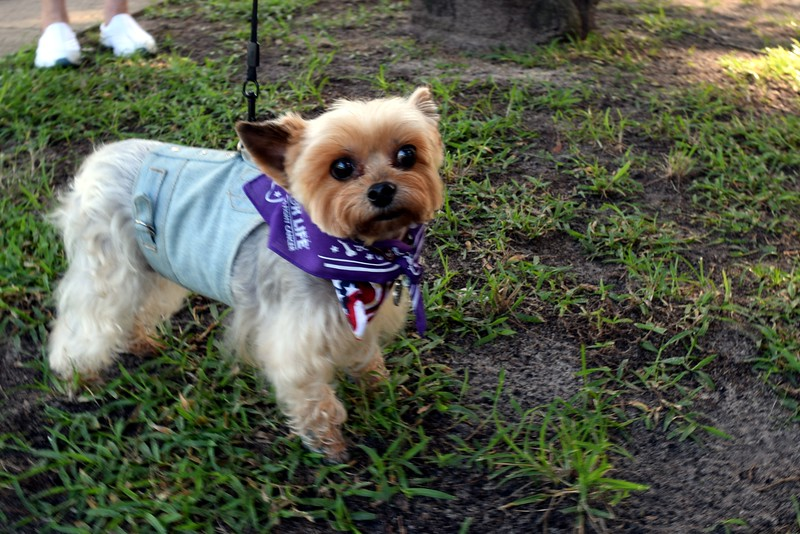 2016 Volusia Co Bark For Life (9).JPG