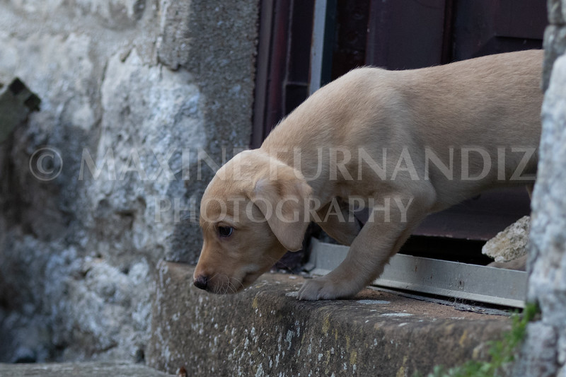 Weika Puppies 24 March 2019-6327.jpg
