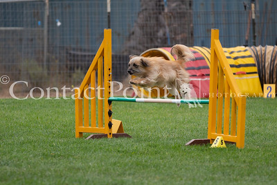 Driven Dogs Agility October 2018