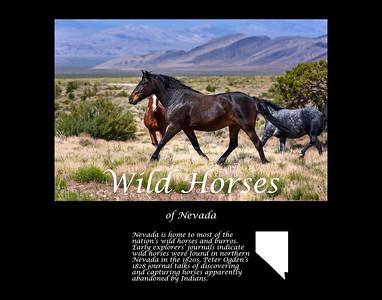 Wild horses of Cold Creek, Nevada