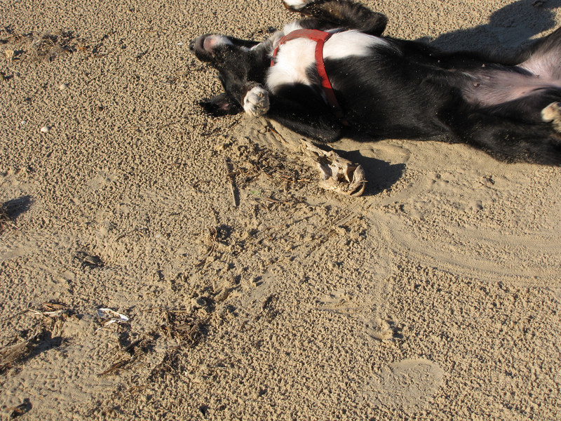 nothing like a good roll in the sand with smelly fish all about