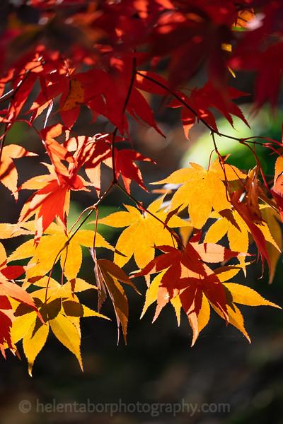 Himalayan Garden Oct 18-23.jpg