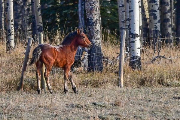 10-26-16 Ab. Wildies - Foal At RDRR