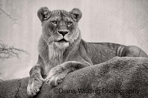At the Rosamond Gifford Zoo