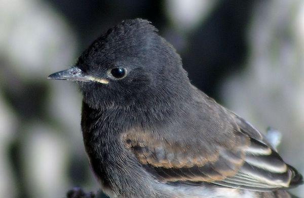 Small Birds Spring 2005