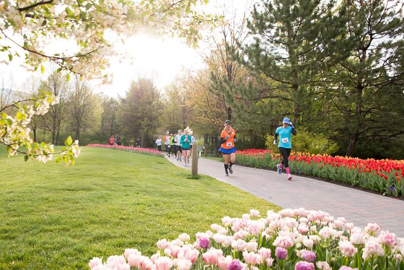 TulipFestHalfMarathon_Runners_Gardens_2015_IMG_4737.jpg